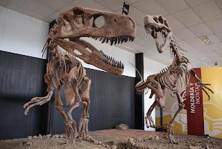 En el Valle de la Luna se han encontrado muchos fósiles
