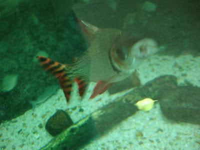 pic lab: Amazon Rainforest Fish Blurs