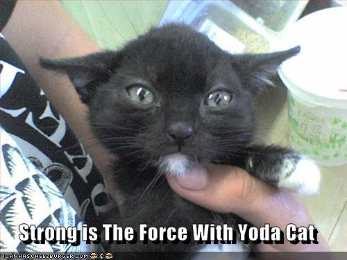 strong-is-the-force-with-yoda-cat.jpg
