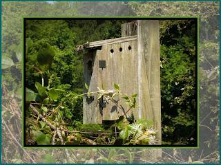Abandoned-Bluebird-House