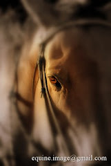Equine Image Website !