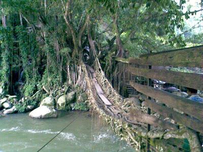 http://2.bp.blogspot.com/_zTVxQz-h-L8/SXFghVQRDQI/AAAAAAAAACk/J_YVJmWni1k/s320/Kawasan+Jembatan+Akar9.jpg
