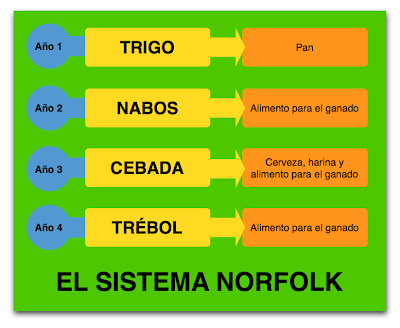 rotacion cultivos norfolk sistema