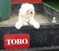 Stella El Toro
