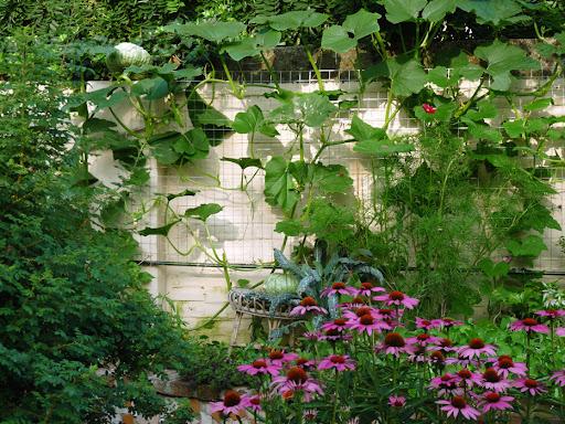 Le delizie dell orto cucurbitacee furighedda gardening