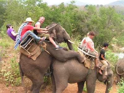 This Probably Wasn't Mentioned in the Safari Brochure!