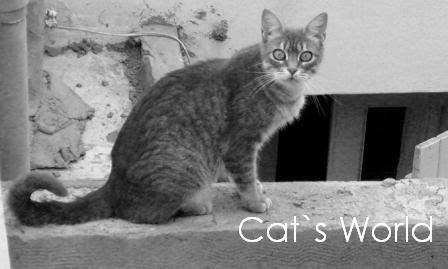 Catu´s world