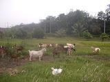 Padang Ragut