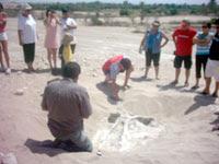 VALLE DE OCUCAJE: desierto tapizado de fósiles marinos de hasta 25 millones de años.