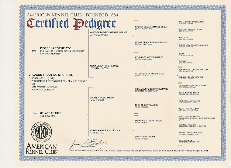 "Hailey's Pedigree - OFA Certification ""Good"""
