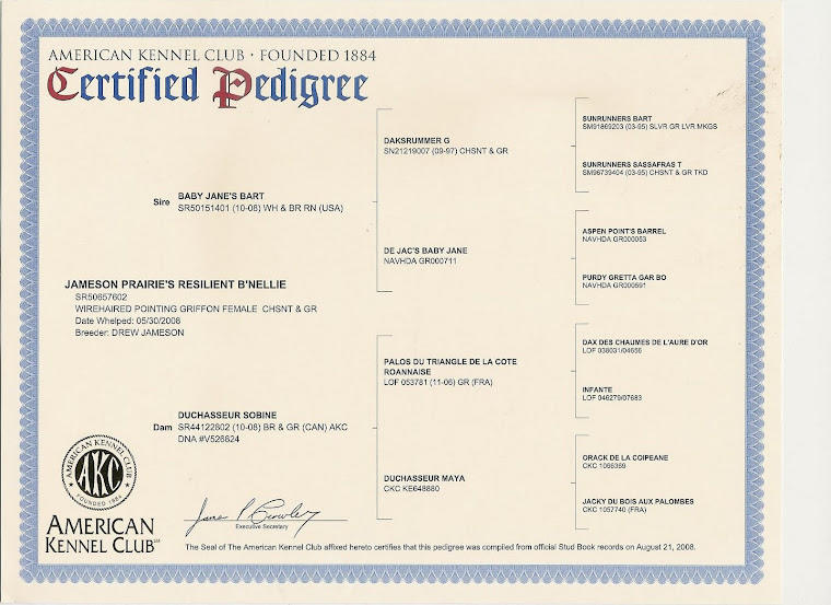"B'Nellie's Pedigree - OFA Certification ""Excellent!"""