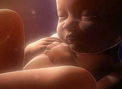 Картинки эмбриона - 012