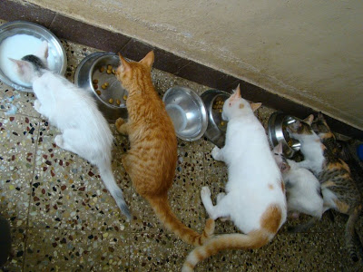 cats lined up for lunch