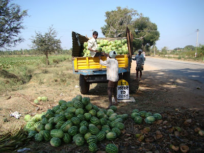 farmers unloading watermelon cargo at a village near Shimoga