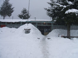 Invierno en Malalcahuello