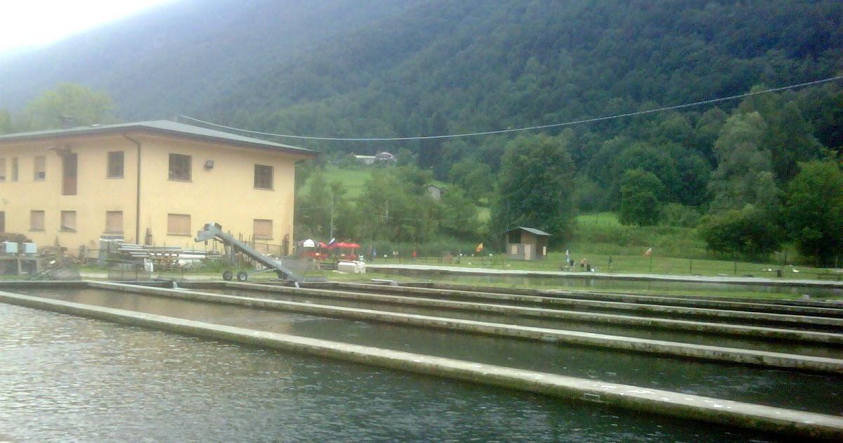 Riserva il canale incubatoio di primaluna allevamento for Vasche per allevamento trote