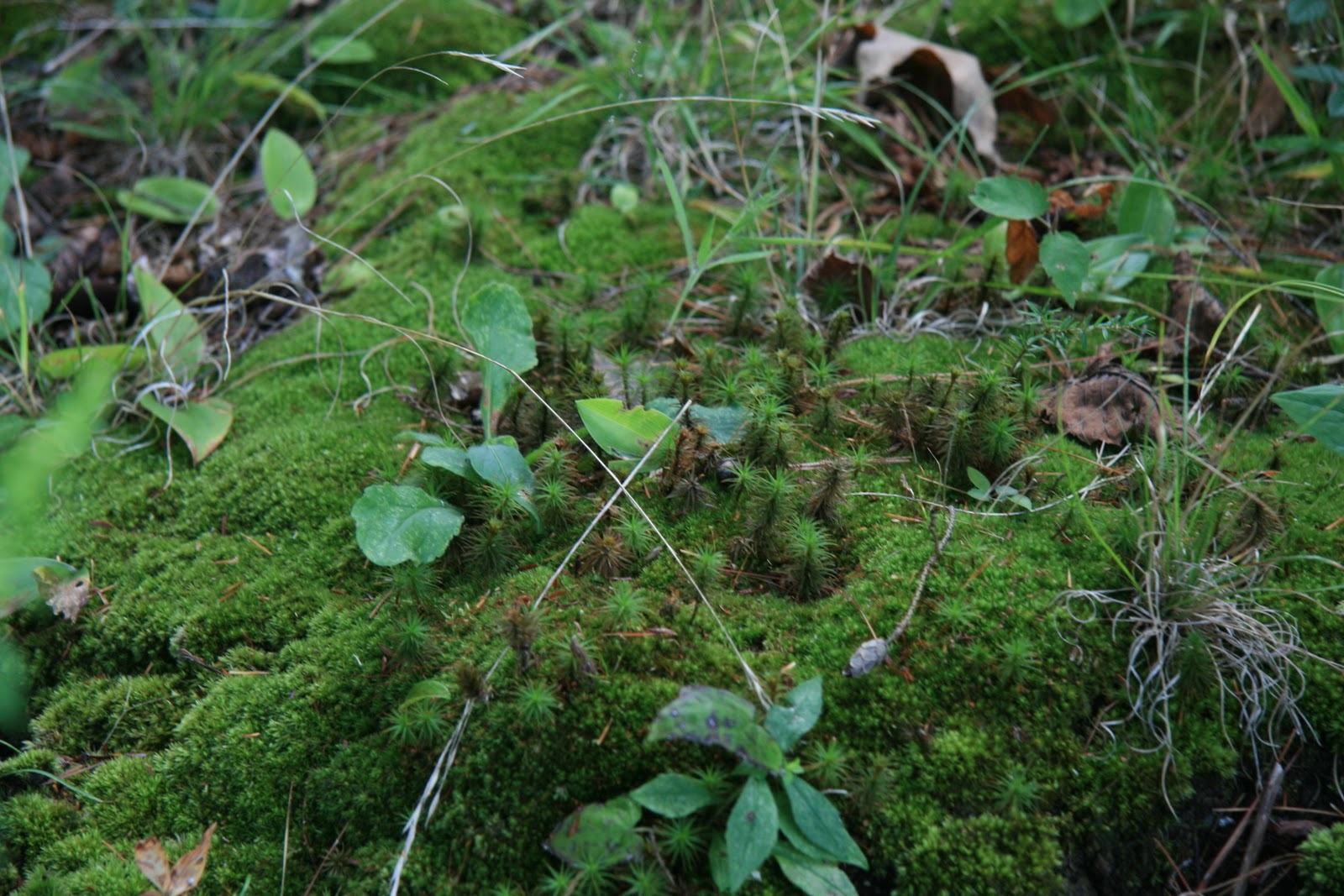 a blog that talks about all things related to moss  entitled  Moss  Plants and More   In it  the author links to a site that sells live moss  bath mats. Gardening and Gardens  The Beauty of Moss
