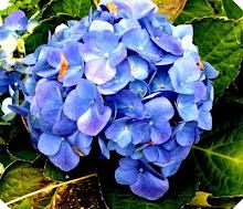 Blue Essence Gardeners