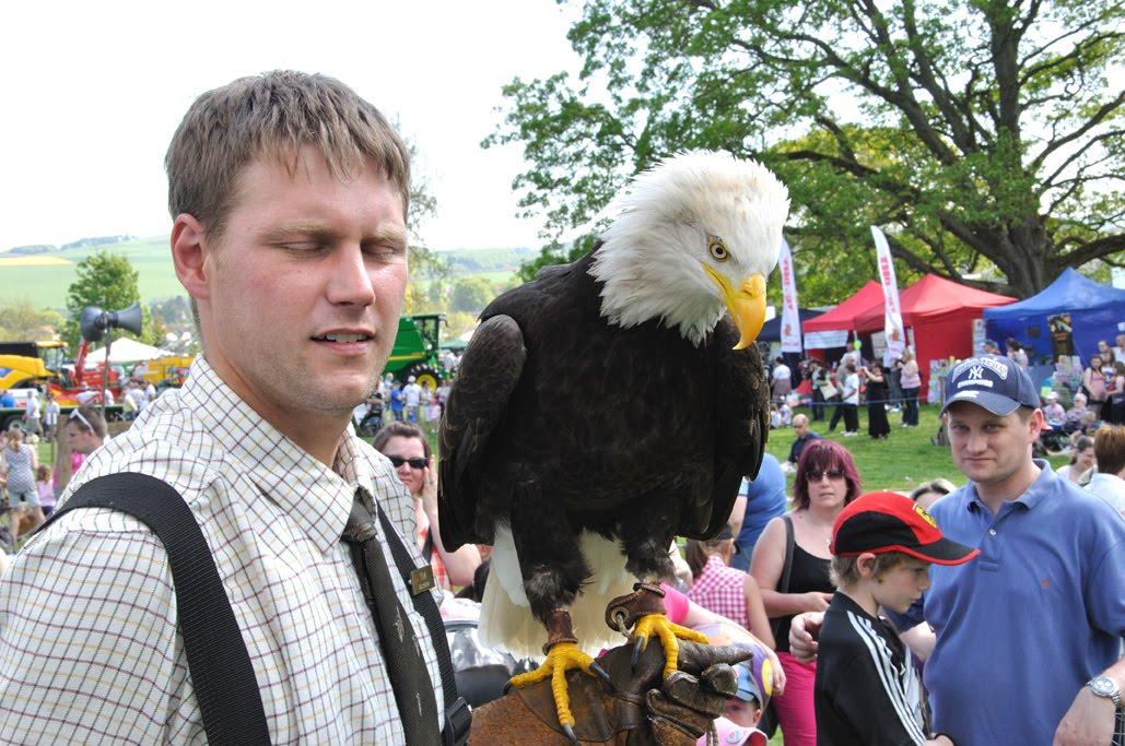 Comparação do tamanho de águias  com relação ao homem. Eagle+at+hand