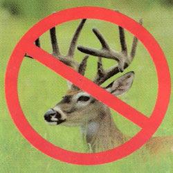 no deer