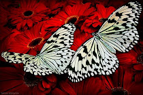 Beauty of Butterflies