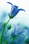 """""""Cada flor é efémera como o instante, o sentimento que inspira tende para a eternidade"""""""