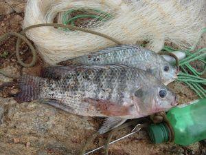 Atlas de Peixes de Pernambuco