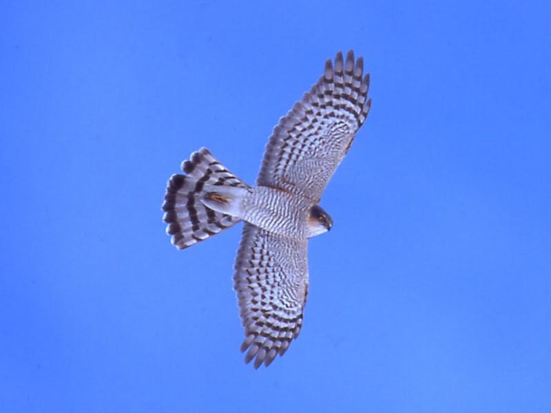Animali gli uccelli del bosco