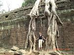 Trädrötter växer över tempel i djungelstaden Angkor, Kambodja
