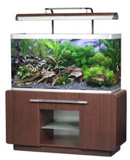 Ver tema la iluminaci n del acuario dulce for Todo para acuarios