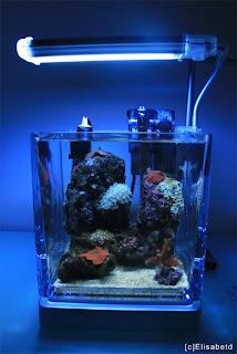 Aquaflash 22 los acuarios marinos m s peque os el pico reef for Peces marinos para acuarios pequenos