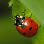 Every time I see a ladybug I think of you.....