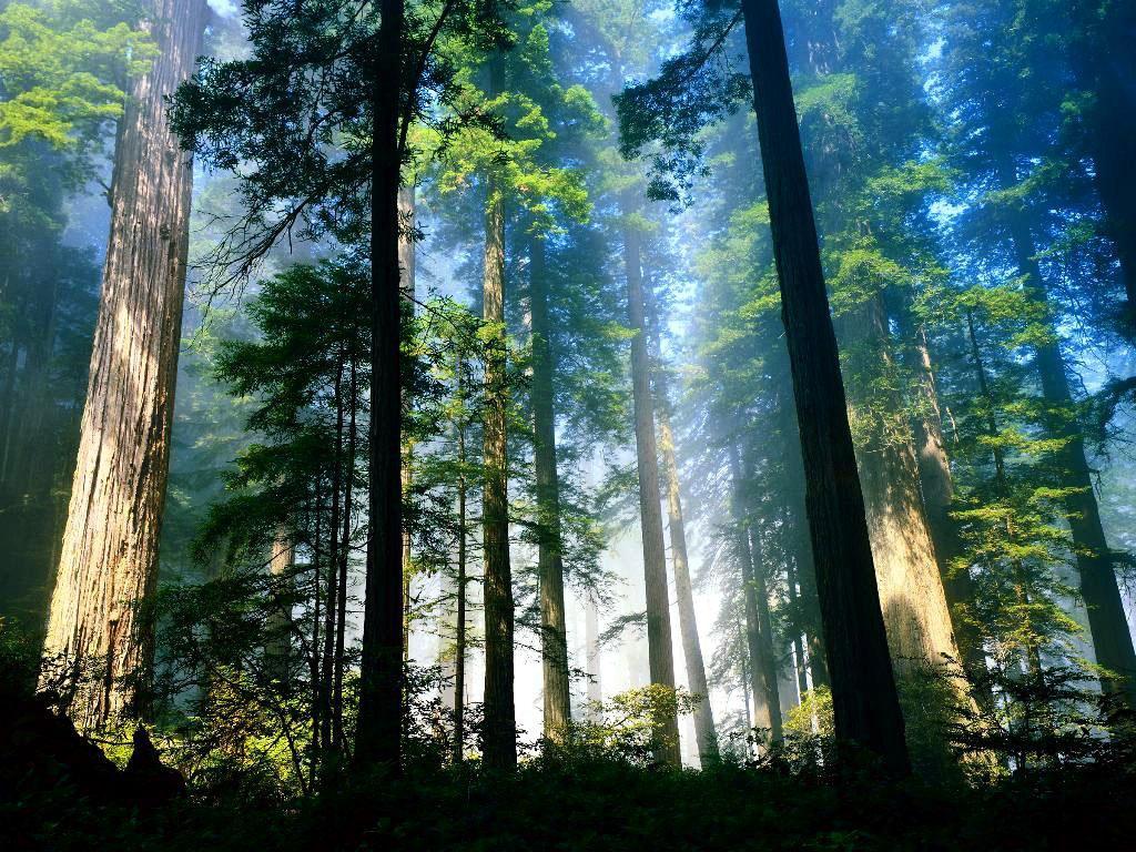http://2.bp.blogspot.com/_zlPHiyPtPyU/TVGQQ23zrmI/AAAAAAAAACg/JRUfjnwEeV8/s1600/vista-wallpaper-aero-woods.jpg
