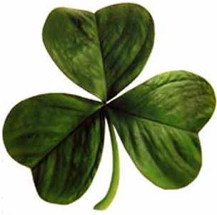 Shamrock o Trébol de tres hojas