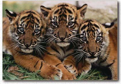 14 Binatang yang Akan Punah di Indonesia - Ketahuilah