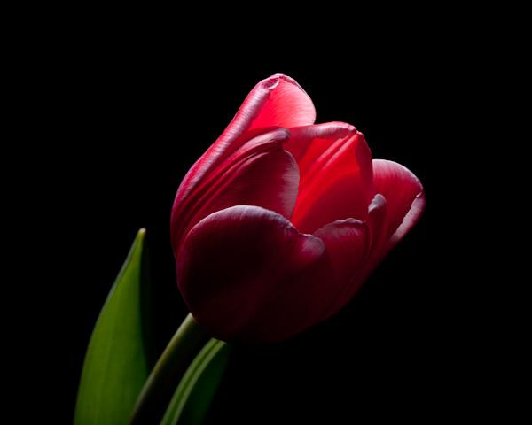 [20100315_Studio_flowers-34.jpg]