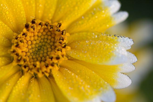 [20100316_ShellCreek_Flowers-2.jpg]