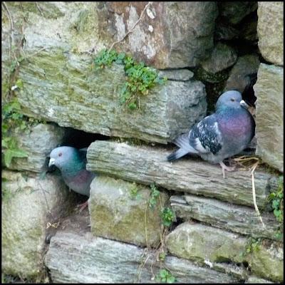 pigeons_16_11_07.jpg