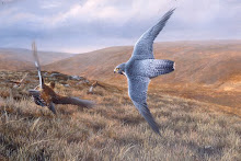 PEREGRINE AND GROUSE