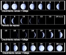 Crecimiento y fases lunares