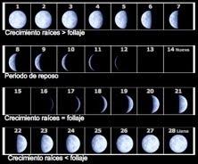 Crecimiento y fases lunares
