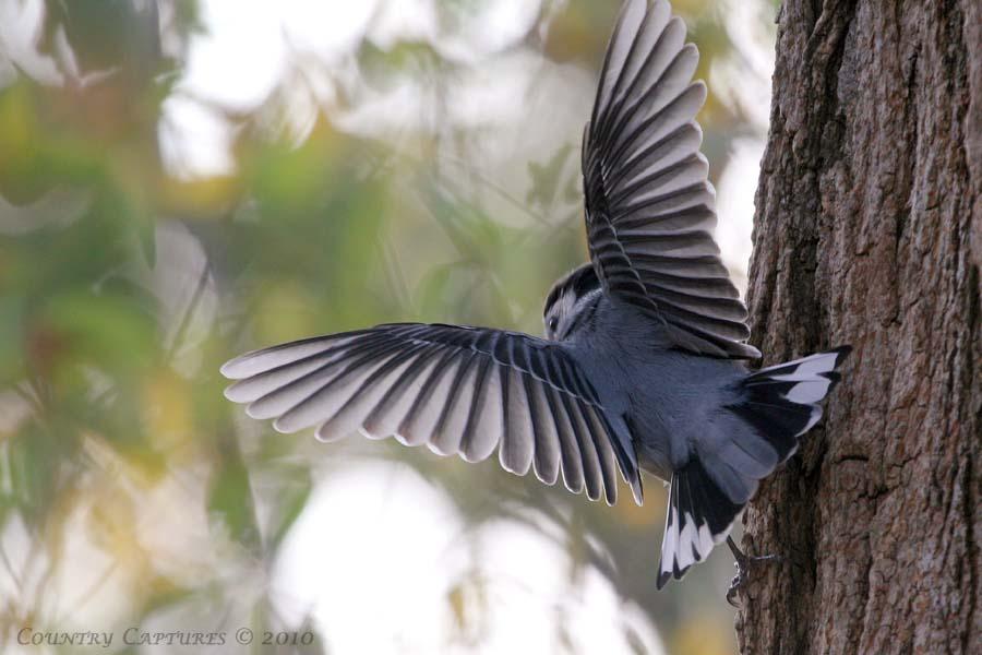 Pájaros comunes de invierno en el centro de Minnesota