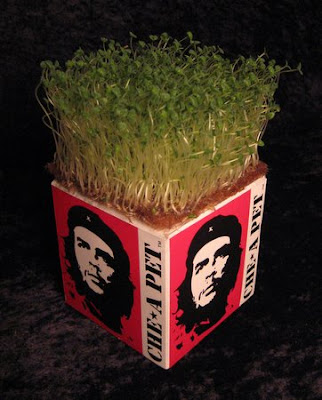 Che-a-pet: Che Guevara Chia pet. The Wine Monkey: