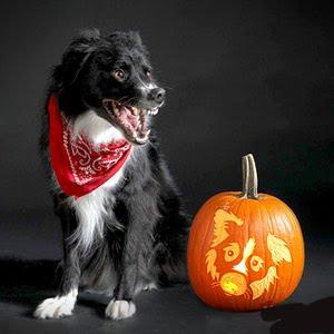 Dog Breed Jack-O-Lanterns Dog Carved Pumpkins
