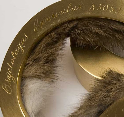 Jeweler and Taxidermist Lucy Jenkins Seen On www.coolpicturegallery.us