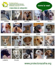 NO COMPRES, ADOPTA