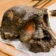 Toumaï Skull