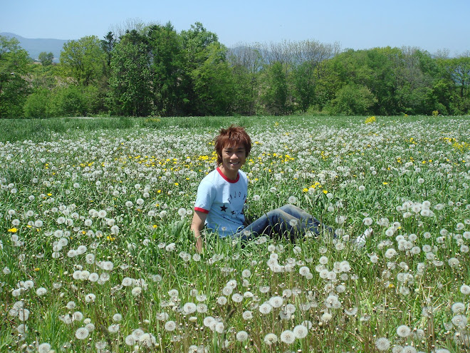 蒲公英的草地