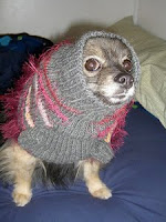 Photo of a small dog in a fluffy sweater.
