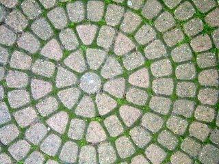 Charming Patio Stones